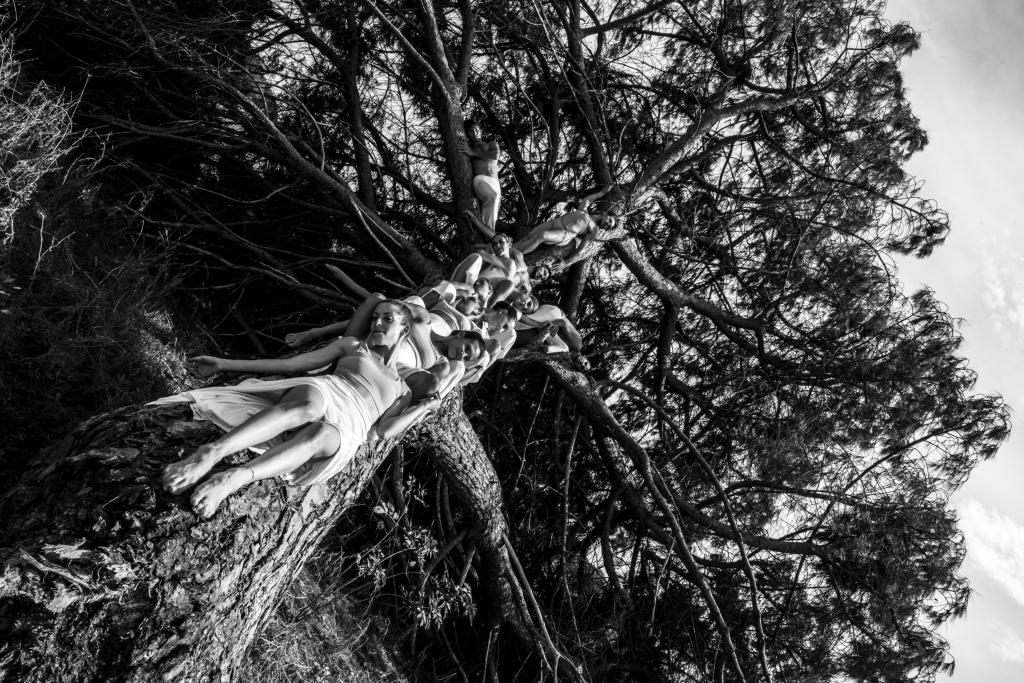 albero-compagnia